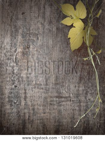 banner with branch of grapes on the background of wooden boards