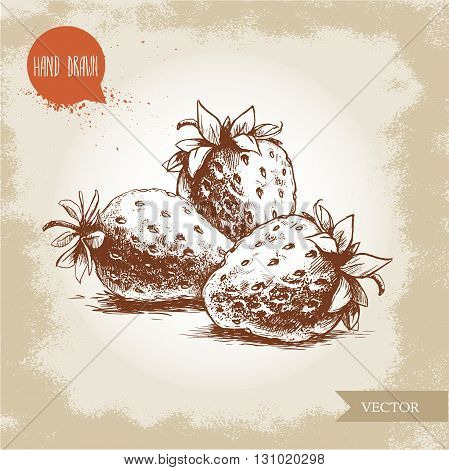 Hand drawn strawberries isolated on vintage background.Retro sketch style vector eco food illustration