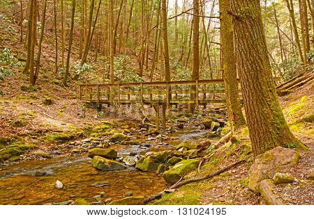 Wilderness Bridge on a Forest trail in Cumberland Gap National Park in Kentucky