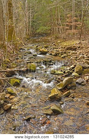 Sugar Run Creek in the Mountains of Cumberland Gap National Park in Kentucky