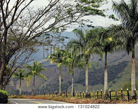 Caminos de la vida,  naturaleza verde Colombia
