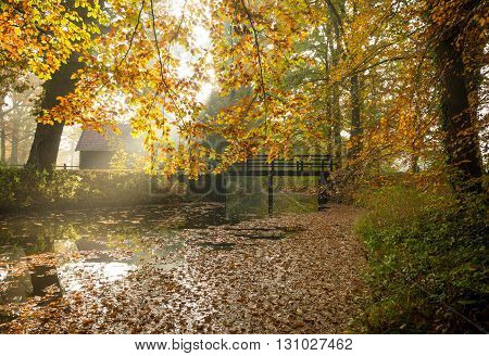 wooden bridge over a small ditch in an autumn forest