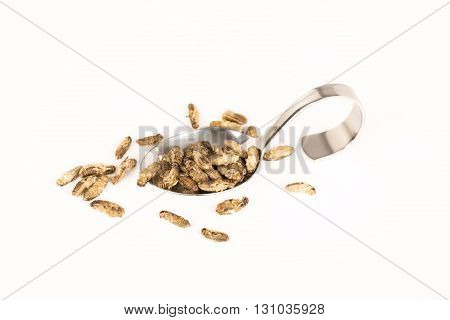 fried insects in spoon. molitors, Protein rich future food