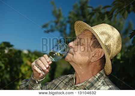 Senior winemaker tasting wine outdoors in vinery.