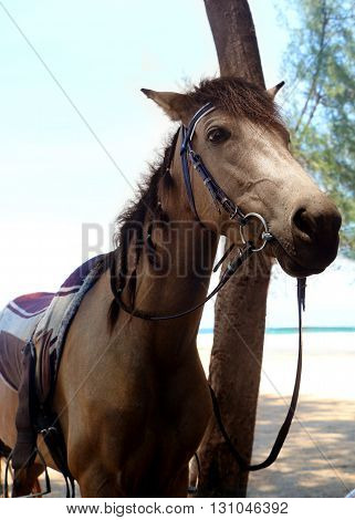 Horse standing near the beach on day light