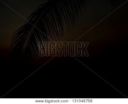 palm leaf silhouette shape in dark tone.