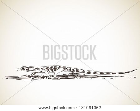 Sketch of monitor lizard, Hand drawn illustration
