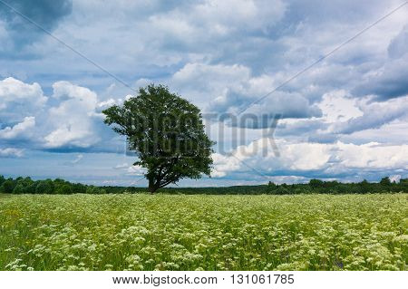 Vibrant Summer Lonely Tree