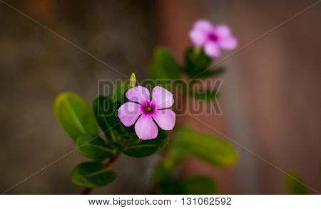 most common flower found in india,street flower