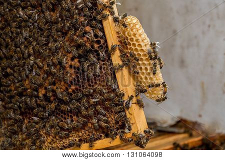 The Bees Working On The Honeycomb