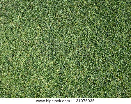 green grass close up, grass in topview