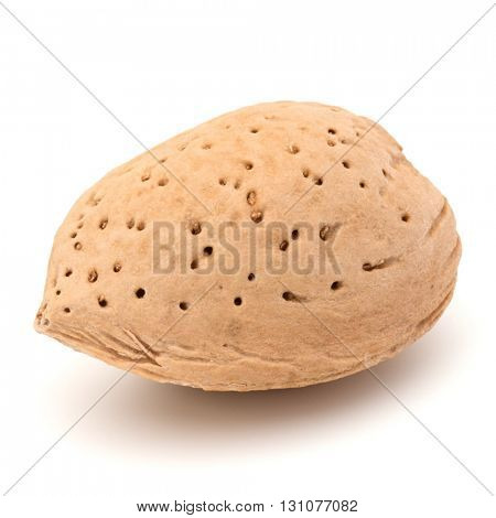 Almond nut in shell isolated on white background close up