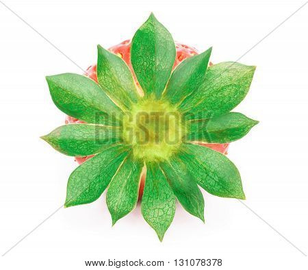 Perfectly cleaned strawberry with leaves isolated on the white background with clipping path. Back view.