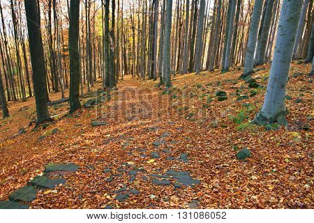 Majestic Particolored Forest With Sunny Beams. Dramatic And Picturesque Morning Scene. Red And Yello