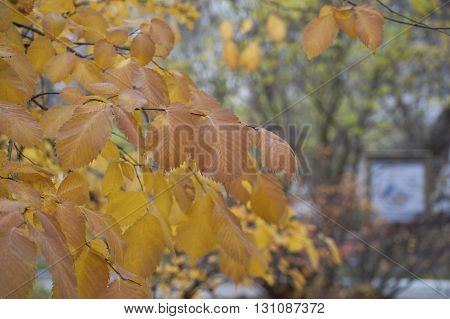 Background Of Autumn Leaves..