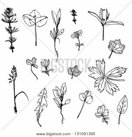 vector set of ink drawing wild flowers, leaves and herbs, drawing wild plants, botanical illustration in vintage style, line drawing floral set, hand drawn vector illustration