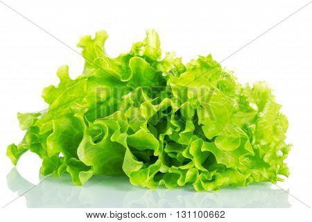 Fresh green lettuce leaves isolated on white background.