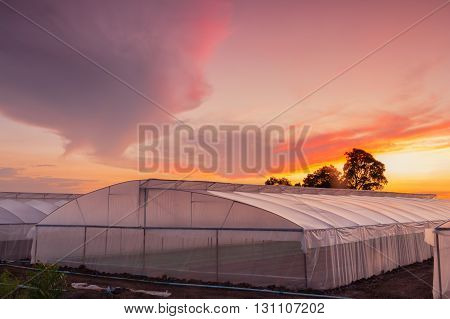 green house in farm at beautiful sunset