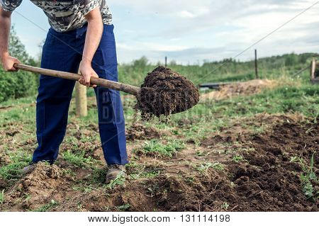 Farmer digging the earth to build a deep bed of in the kitchen garden.