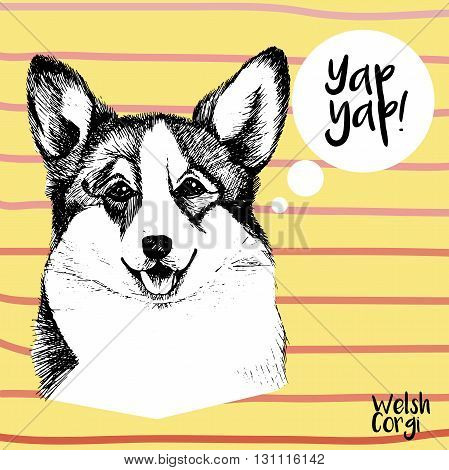 Vector close up portrait of welsh corgi pembroke . Hand drawn domestic pet dog illustration. Isolated on yellow background with rose stripes.