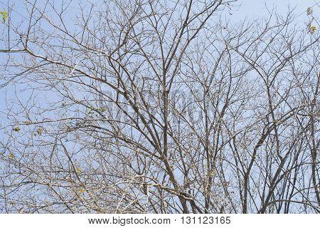 background branch not leaf brown sprig treetop