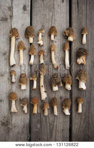 Morel Mushrooms On Wooden Background