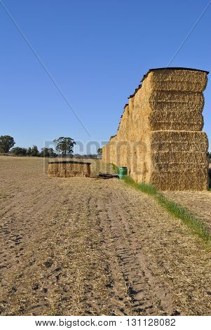 Hay stack on the edge of a farm paddock