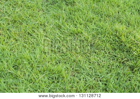 background nature lawn color green beautiful bright