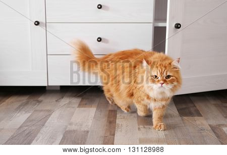 Cute ginger cat near chest of drawers