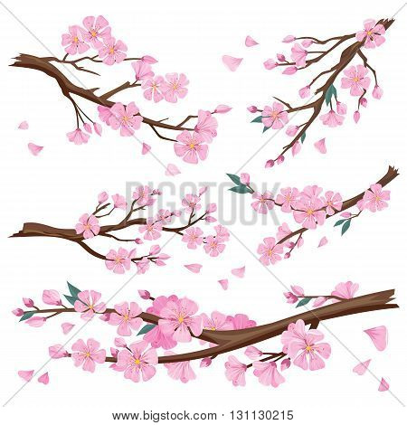 Set of realistic sakura japan cherry branch with blooming flowers. Nature background with blossom branch of pink sakura flowers. Template isolated on white background. Vector illustration