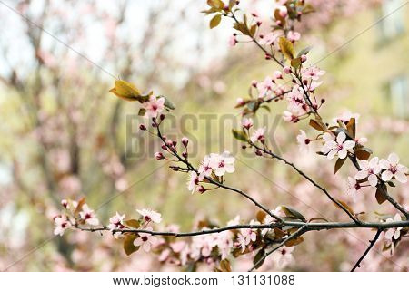 Blossoming tree branches on spring day
