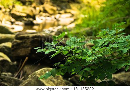 Tree branches over rocks in water at Black river gorge trekking path, west Serbia
