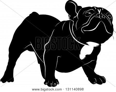 Dog Bulldog. The dog breed bulldog.Dog Bulldog black silhouette vector isolated on white background.