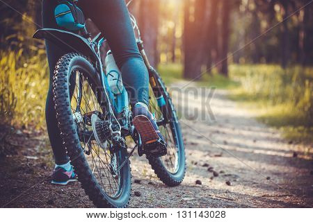 low angle view of cyclist riding mountain bike in the forest at sunset