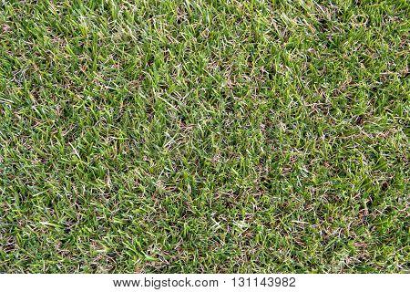 Artificial grass background. grass, artificial, field, texture, background,