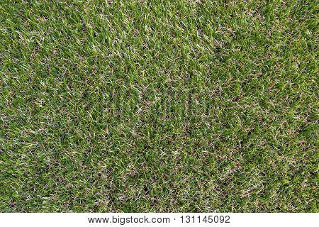 Artificial grass background, grass, artificial, field, surface