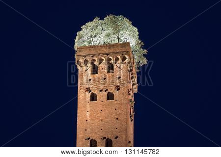 Medieval Guinigi Tower - in Lucca Tuscany Italy which has seven oak trees growing from the top. Photographed at night with illuminated trees for a dramatic look. A unique and quirky historical site in Europe.