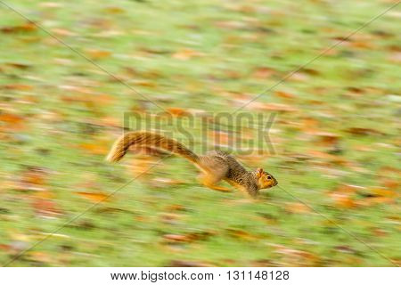 A squirrel that was running from a hawk. Taken in Kentucky.