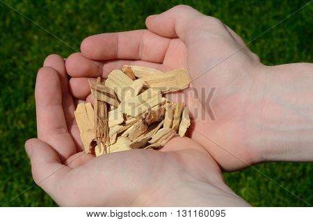 Hands Holding Hickory Wood Chips For Barbecuing