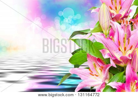 Close up of beautiful pink lilies flowers