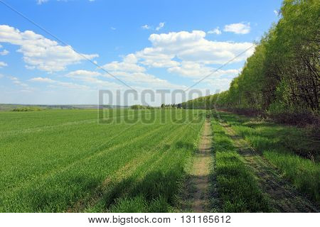 Rural way on the edge of a field photo