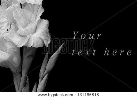 Black and white greeting card with gladiolus on black background