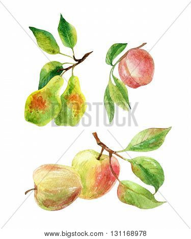 Apple pear and peach branches with leaves and fruits. Watercolor apple pear peach fruits isolated on white background. Summer harvest. Fruit branch set. Hand drawn illustration