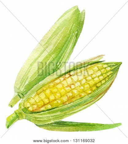 Corncob with leaf in watercolor. Watercolor corn cob painting isolated on white background. Hand drawn illustration.