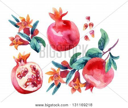 Watercolor pomegranate bloom branches and fruit set. Pomegranate fruit berries and flower isolated on white background. Hand painted illustration