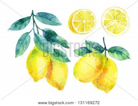 Watercolor lemon fruit branch with leaves isolated on white background. Lemon citrus tree. Lemon branch and slices. Lemon branch with leaves. Hand painted illustration