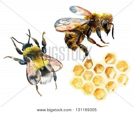 Watercolor bee bumble bee and honeycomb set. Honey collection for label template design. Hand painted illustration