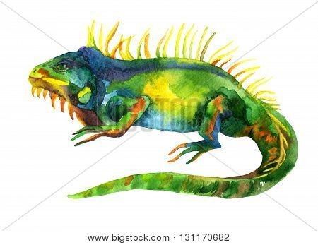 watercolor iguana isolated on white background. Hand painted raster illustration