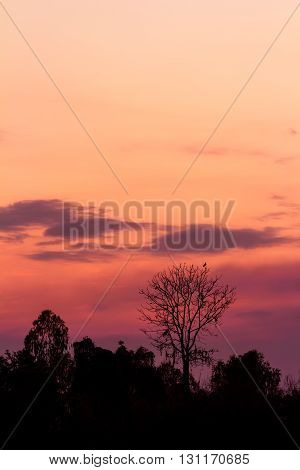 trees silhouette at a beautiful sunset background