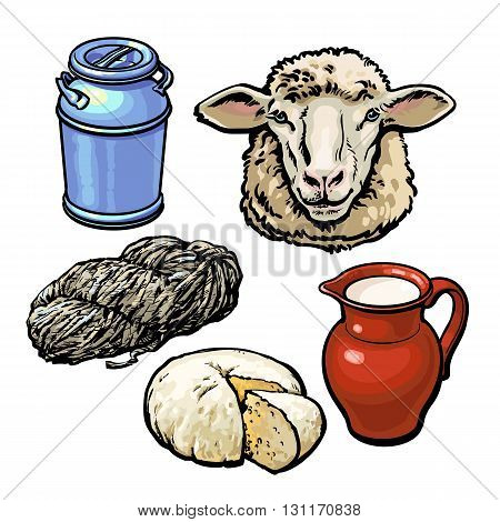 head of sheep and production of products, vector sketch hand-drawn illustration isolated on white background, dairy products from sheep, wool, farm cheese and milk